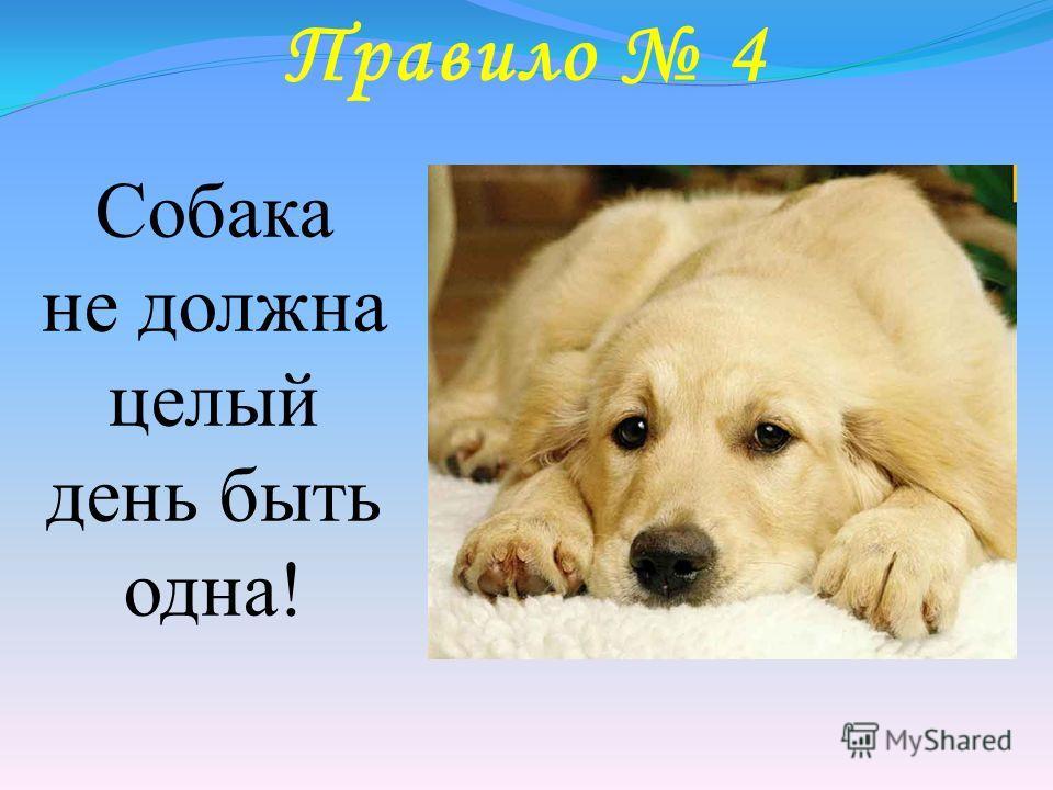 Правило 4 Собака не должна целый день быть одна!
