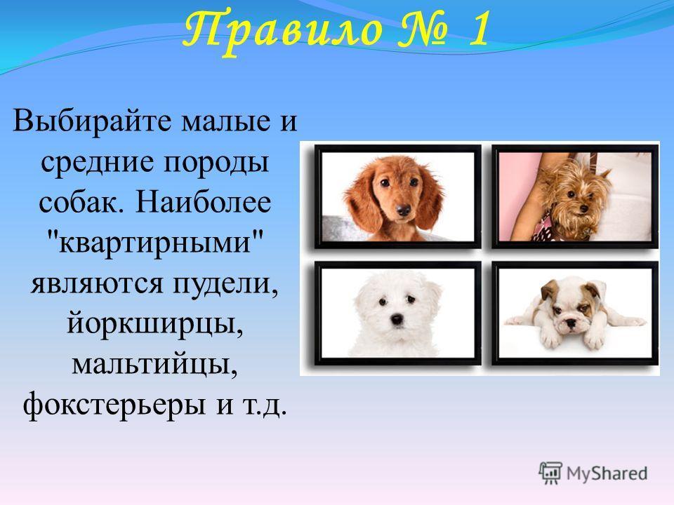 Правило 1 Выбирайте малые и средние породы собак. Наиболее квартирными являются пудели, йоркширцы, мальтийцы, фокстерьеры и т.д.