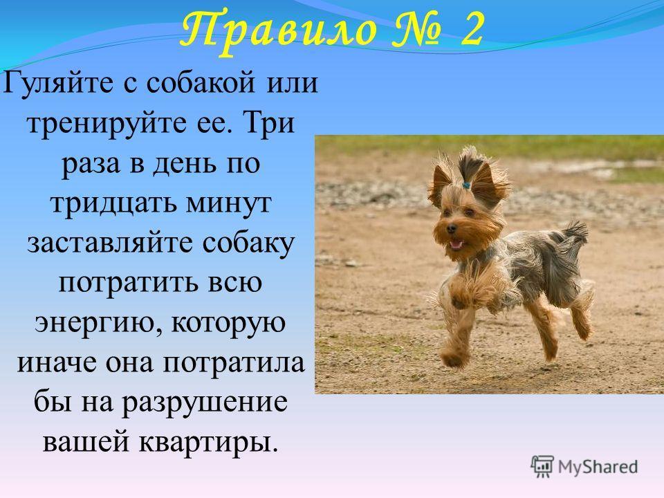 Правило 2 Гуляйте с собакой или тренируйте ее. Три раза в день по тридцать минут заставляйте собаку потратить всю энергию, которую иначе она потратила бы на разрушение вашей квартиры.