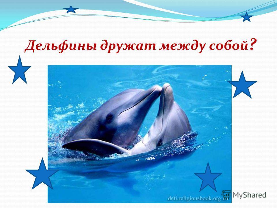 Как дельфины относятся к своим детенышам? Дельфины – очень трогательные родители, опекающие своих детенышей около пяти лет.