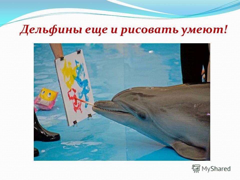 Нельзя не признать удивительную схожесть человека и дельфина. Почему дельфинотерапия эффективна?