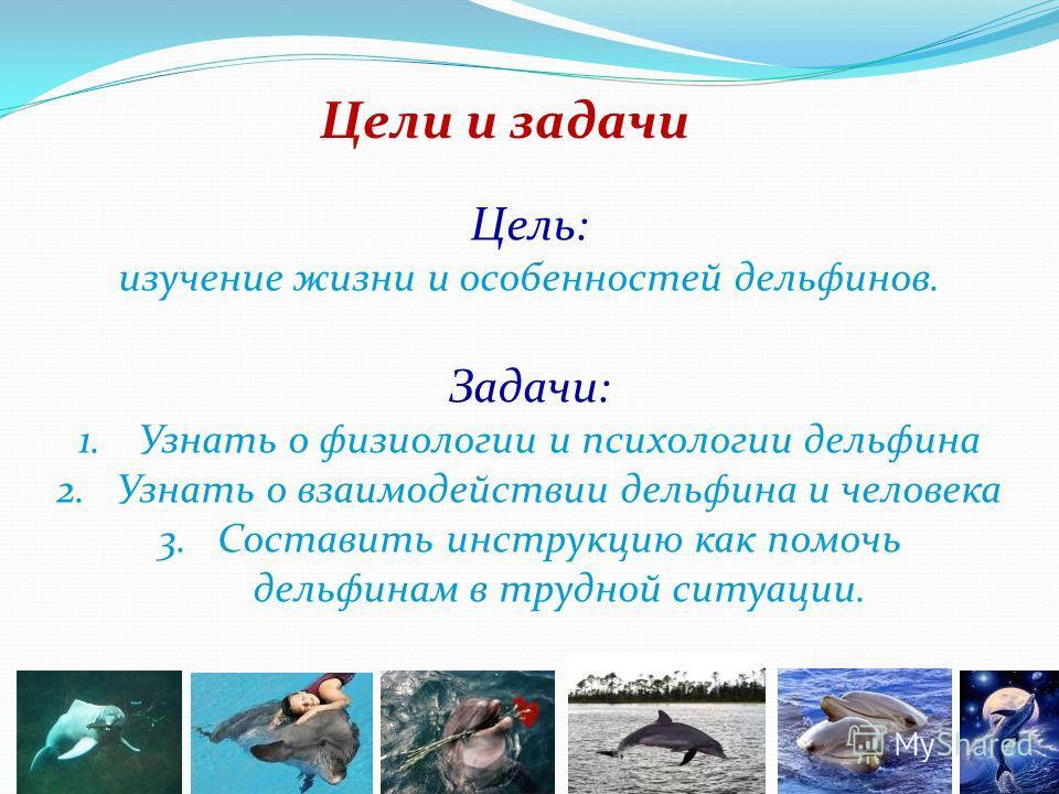 Великолепные дельфины 3«а», Кокнаева Рената