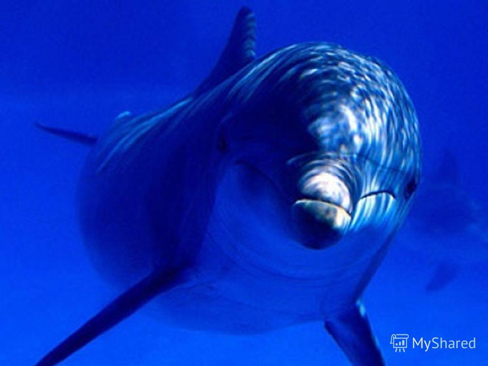 Как дельфины спят? Когда животное отдыхает оно лучше выполняет разные трюки Сон дельфинов очень необычный!