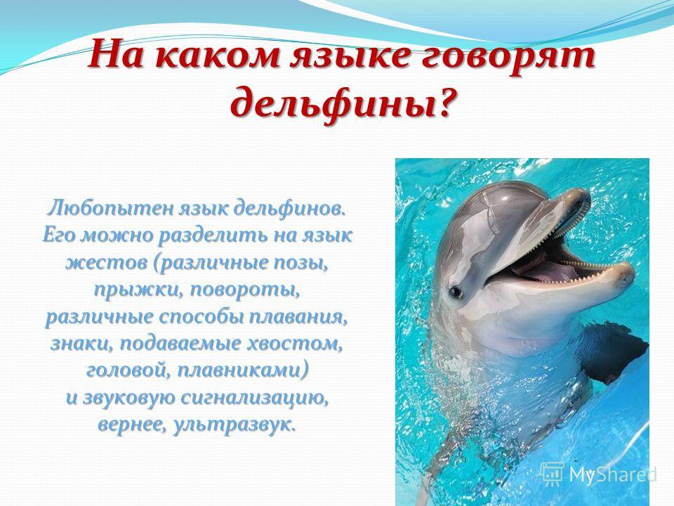 Каков слух дельфина? Слух дельфинов – уникален.