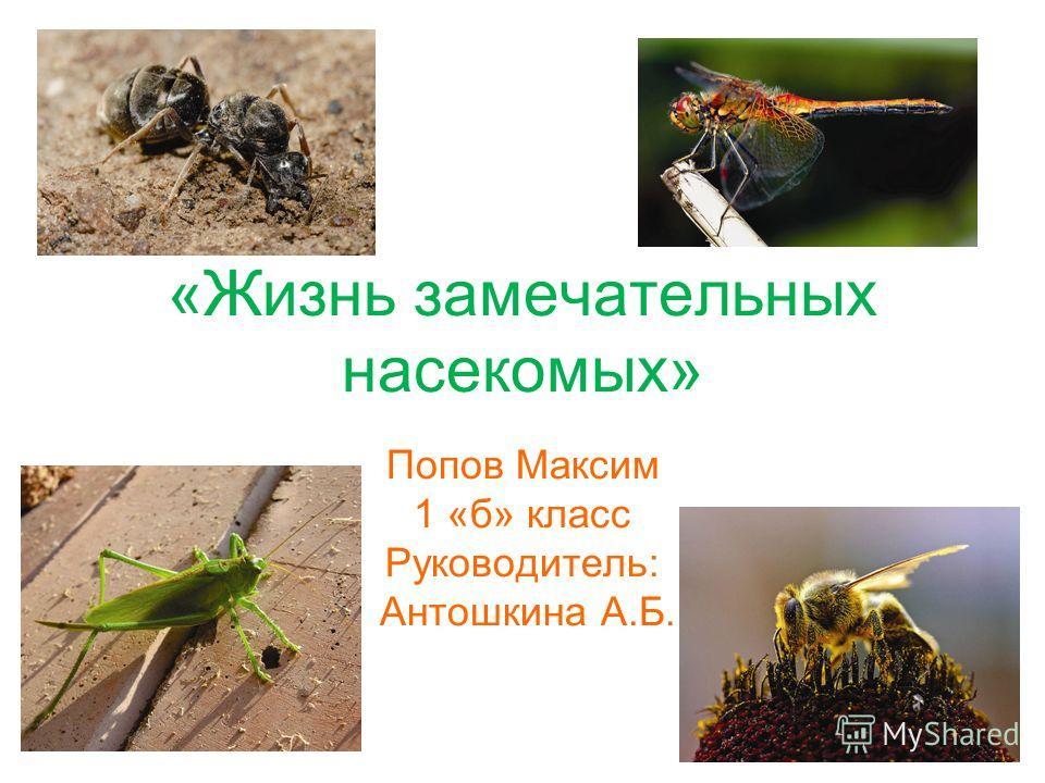 «Жизнь замечательных насекомых» Попов Максим 1 «б» класс Руководитель: Антошкина А.Б.