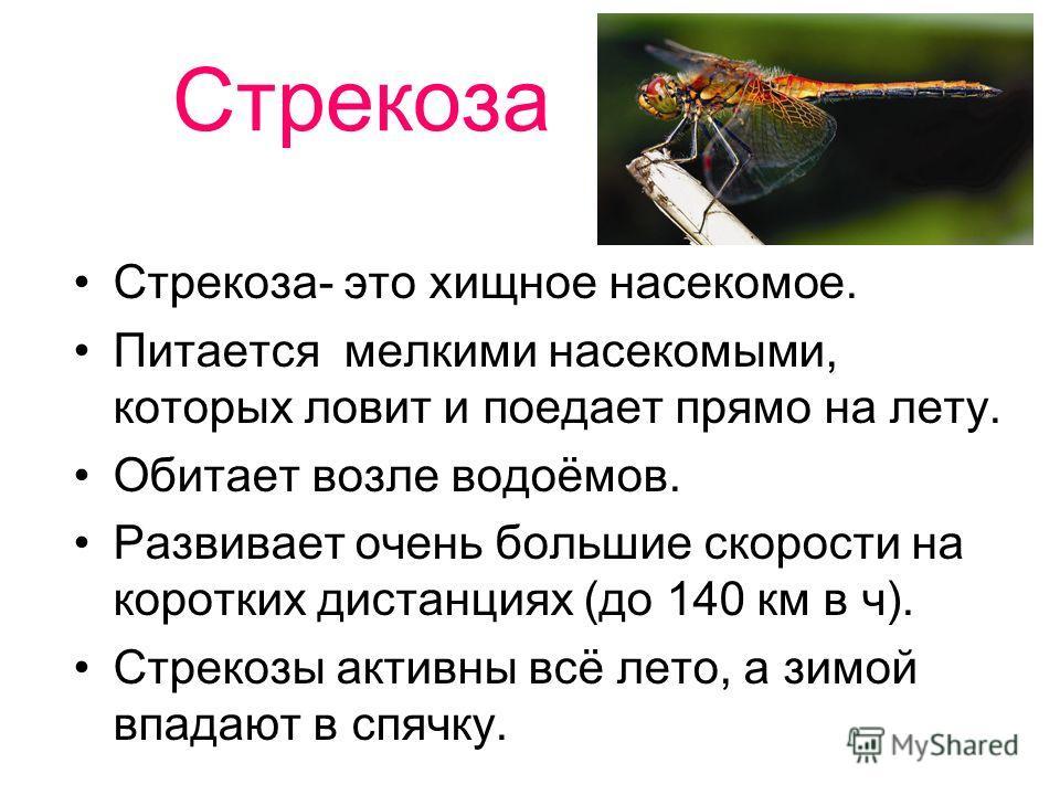 Стрекоза Стрекоза- это хищное насекомое. Питается мелкими насекомыми, которых ловит и поедает прямо на лету. Обитает возле водоёмов. Развивает очень большие скорости на коротких дистанциях (до 140 км в ч). Стрекозы активны всё лето, а зимой впадают в