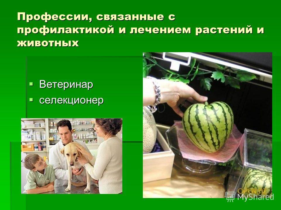 Профессии, связанные с профилактикой и лечением растений и животных Ветеринар Ветеринар селекционер селекционер