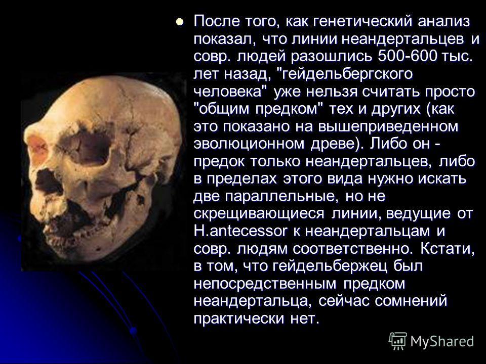 После того, как генетический анализ показал, что линии неандертальцев и совр. людей разошлись 500-600 тыс. лет назад,