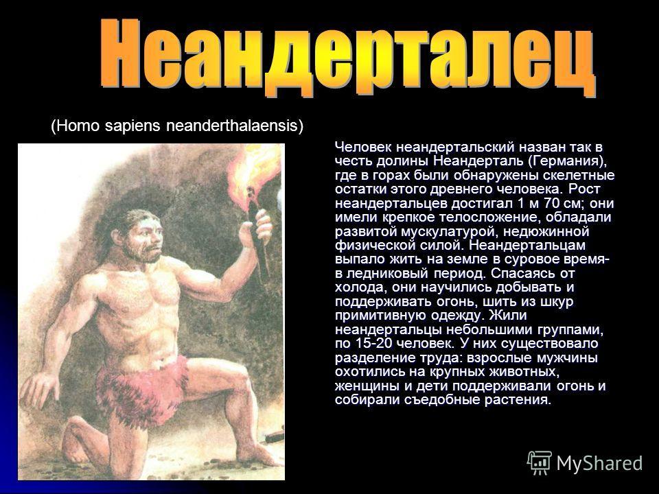 Человек неандертальский назван так в честь долины Неандерталь (Германия), где в горах были обнаружены скелетные остатки этого древнего человека. Рост неандертальцев достигал 1 м 70 см; они имели крепкое телосложение, обладали развитой мускулатурой, н