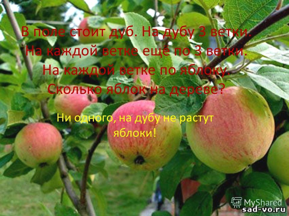 В поле стоит дуб. На дубу 3 ветки. На каждой ветке ещё по 3 ветки. На каждой ветке по яблоку. Сколько яблок на дереве? Ни одного, на дубу не растут яблоки!