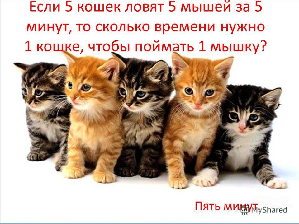 Если 5 кошек ловят 5 мышей за 5 минут, то сколько времени нужно 1 кошке, чтобы поймать 1 мышку? Пять минут.