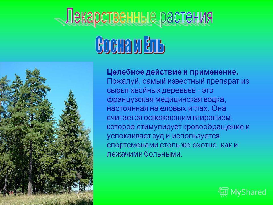 Целебное действие и применение. Пожалуй, самый известный препарат из сырья хвойных деревьев - это французская медицинская водка, настоянная на еловых иглах. Она считается освежающим втиранием, которое стимулирует кровообращение и успокаивает зуд и ис