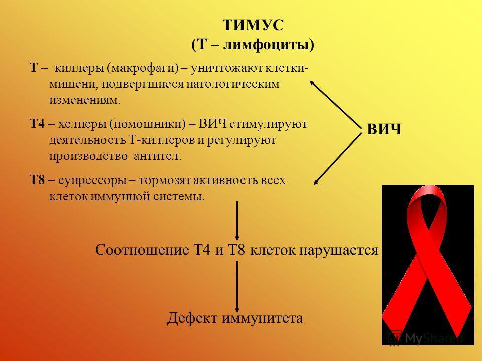 ТИМУС (Т – лимфоциты) Т – киллеры (макрофаги) – уничтожают клетки- мишени, подвергшиеся патологическим изменениям. Т4 – хелперы (помощники) – ВИЧ стимулируют деятельность Т-киллеров и регулируют производство антител. Т8 – супрессоры – тормозят активн