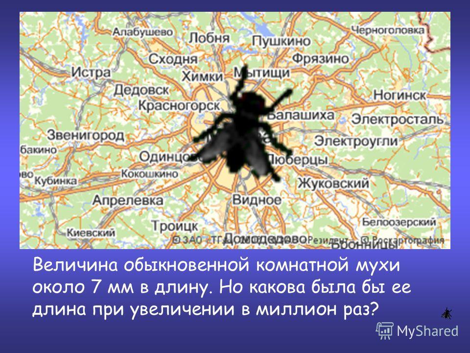 Величина обыкновенной комнатной мухи около 7 мм в длину. Но какова была бы ее длина при увеличении в миллион раз?