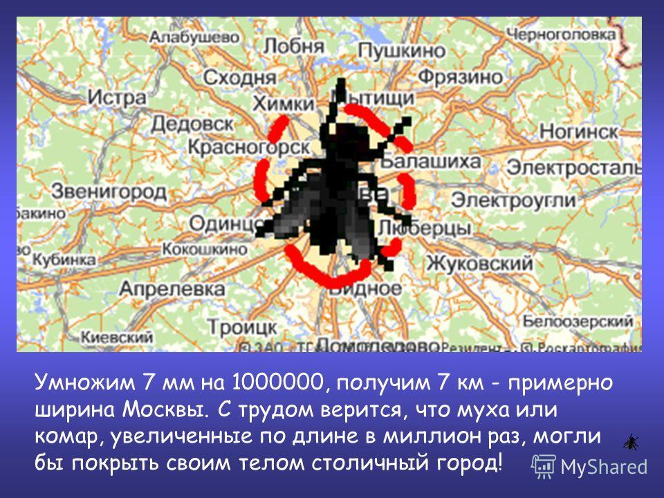Умножим 7 мм на 1000000, получим 7 км - примерно ширина Москвы. С трудом верится, что муха или комар, увеличенные по длине в миллион раз, могли бы покрыть своим телом столичный город!
