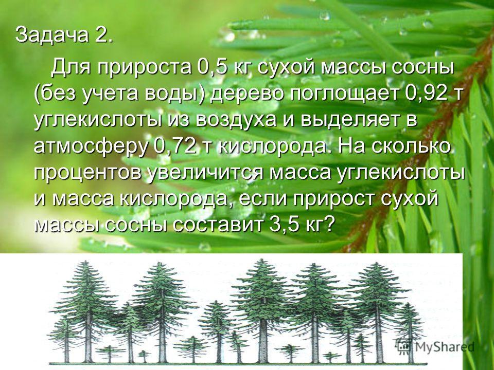 Задача 2. Для прироста 0,5 кг сухой массы сосны (без учета воды) дерево поглощает 0,92 т углекислоты из воздуха и выделяет в атмосферу 0,72 т кислорода. На сколько процентов увеличится масса углекислоты и масса кислорода, если прирост сухой массы сос