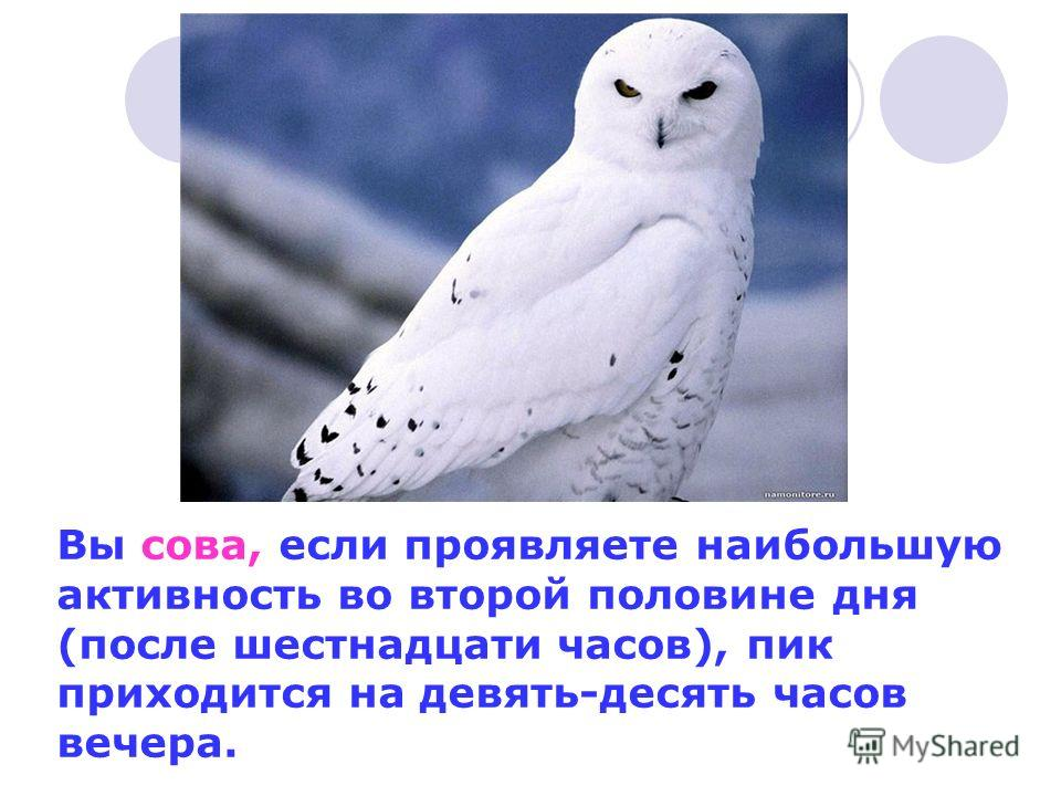 Вы сова, если проявляете наибольшую активность во второй половине дня (после шестнадцати часов), пик приходится на девять-десять часов вечера.