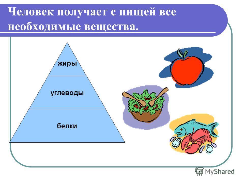 Человек получает с пищей все необходимые вещества. жиры углеводы белки