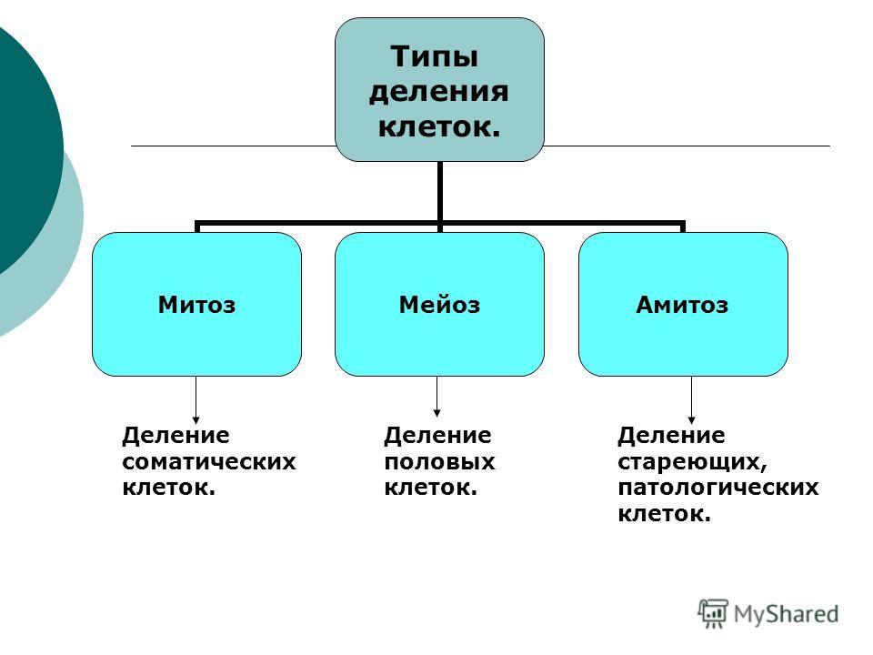Типы деления клеток. МитозМейозАмитоз Деление соматических клеток. Деление половых клеток. Деление стареющих, патологических клеток.
