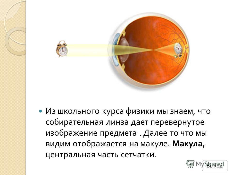Из школьного курса физики мы знаем, что собирательная линза дает перевернутое изображение предмета. Далее то что мы видим отображается на макуле. Макула, центральная часть сетчатки. Выход