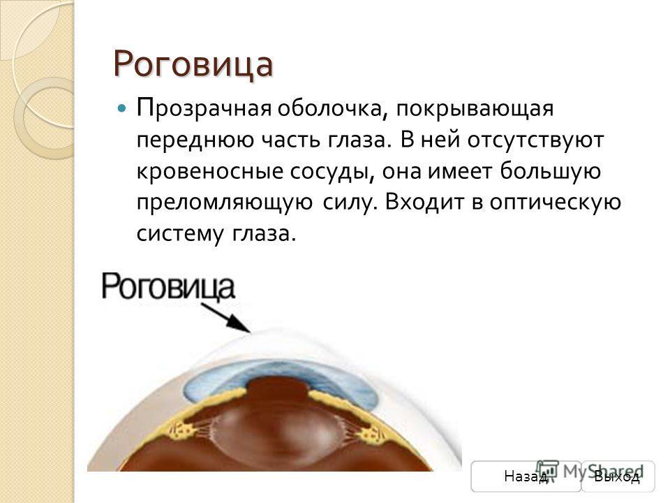 Роговица П розрачная оболочка, покрывающая переднюю часть глаза. В ней отсутствуют кровеносные сосуды, она имеет большую преломляющую силу. Входит в оптическую систему глаза. НазадВыход