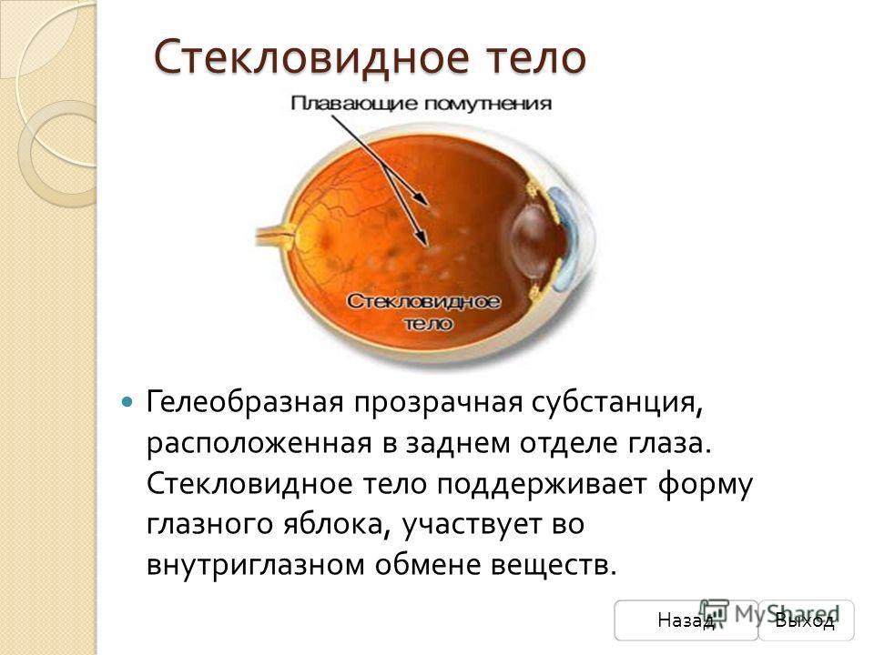 Стекловидное тело Гелеобразная прозрачная субстанция, расположенная в заднем отделе глаза. Стекловидное тело поддерживает форму глазного яблока, участвует во внутриглазном обмене веществ. НазадВыход