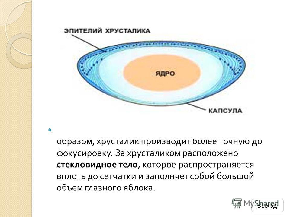 Хрусталик тоже линза, как и роговица. Таким образом, хрусталик производит более точную до фокусировку. За хрусталиком расположено стекловидное тело, которое распространяется вплоть до сетчатки и заполняет собой большой объем глазного яблока. Выход