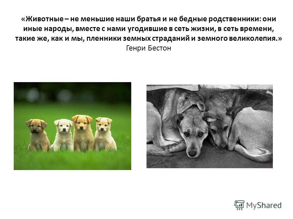 Презентация На Тему Животные Братья Наши Меньшие