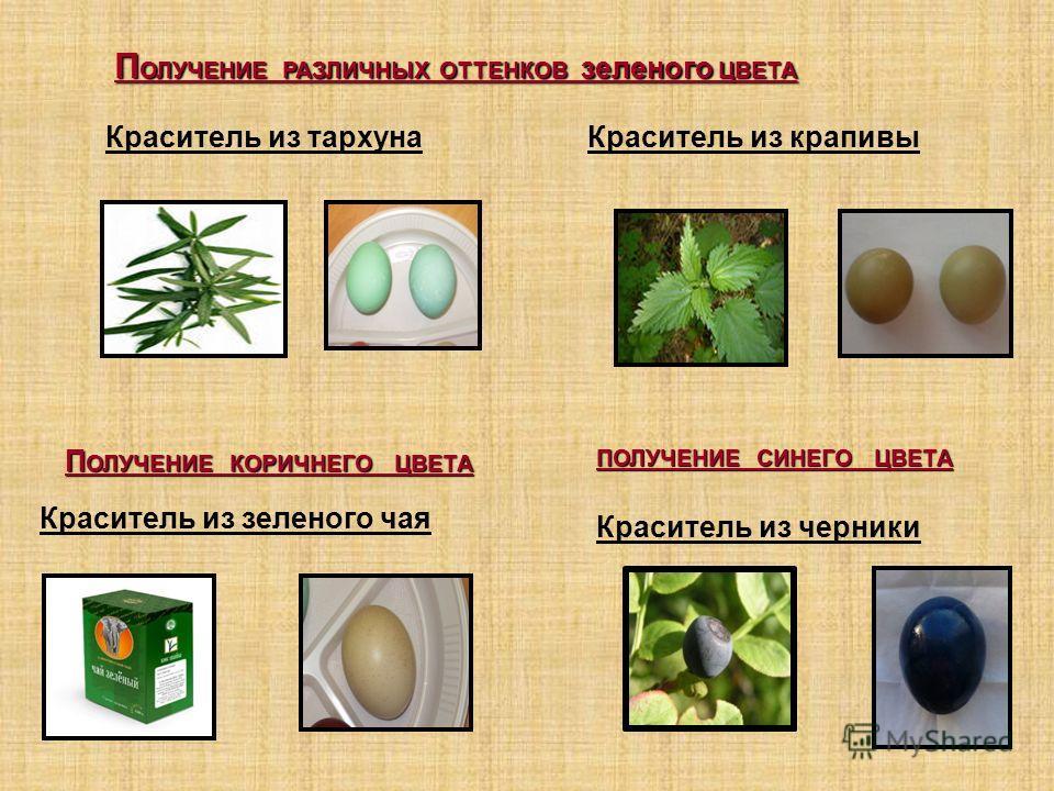 П ОЛУЧЕНИЕ РАЗЛИЧНЫХ ОТТЕНКОВ зеленого ЦВЕТА Краситель из крапивыКраситель из тархуна Краситель из черники П ОЛУЧЕНИЕ КОРИЧНЕГО ЦВЕТА ПОЛУЧЕНИЕ СИНЕГО ЦВЕТА Краситель из зеленого чая