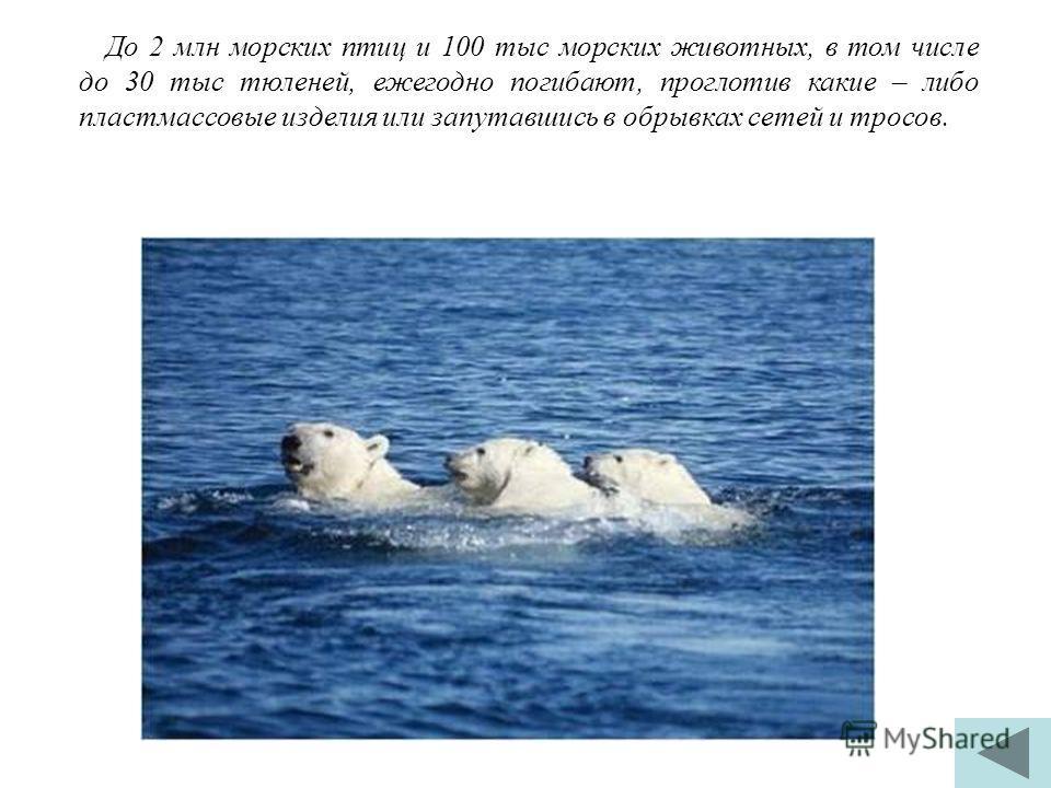 До 2 млн морских птиц и 100 тыс морских животных, в том числе до 30 тыс тюленей, ежегодно погибают, проглотив какие – либо пластмассовые изделия или запутавшись в обрывках сетей и тросов.