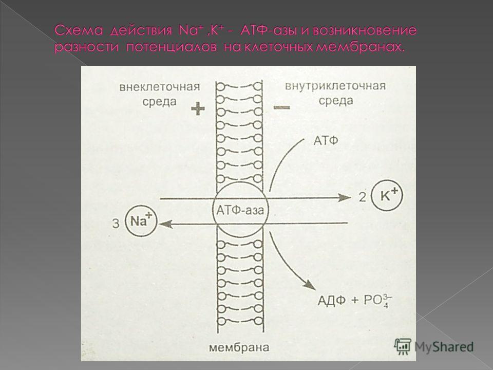 В организме взрослого человека содержится около 100г натрия. Для восполнения естественной убыли натрия из организма человек ежедневно должен потреблять с пищей 6-8г NaCI Важнейшими природными минералами являются: NaCI-галий(каменная соль); Na 2 SO4*1