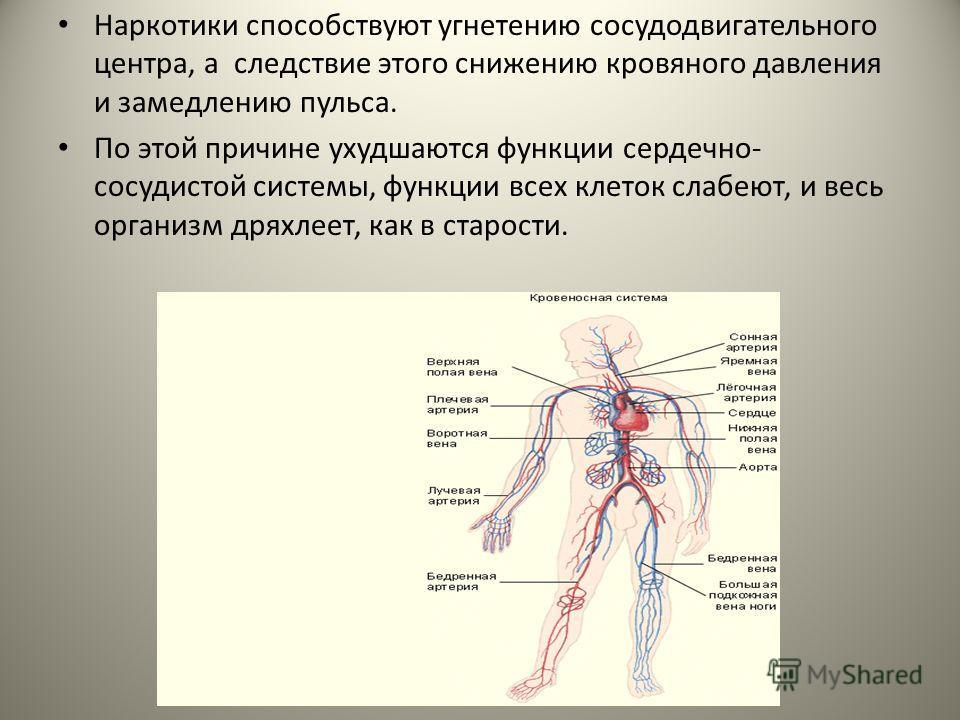 Наркотики способствуют угнетению сосудодвигательного центра, а следствие этого снижению кровяного давления и замедлению пульса. По этой причине ухудшаются функции сердечно- сосудистой системы, функции всех клеток слабеют, и весь организм дряхлеет, ка