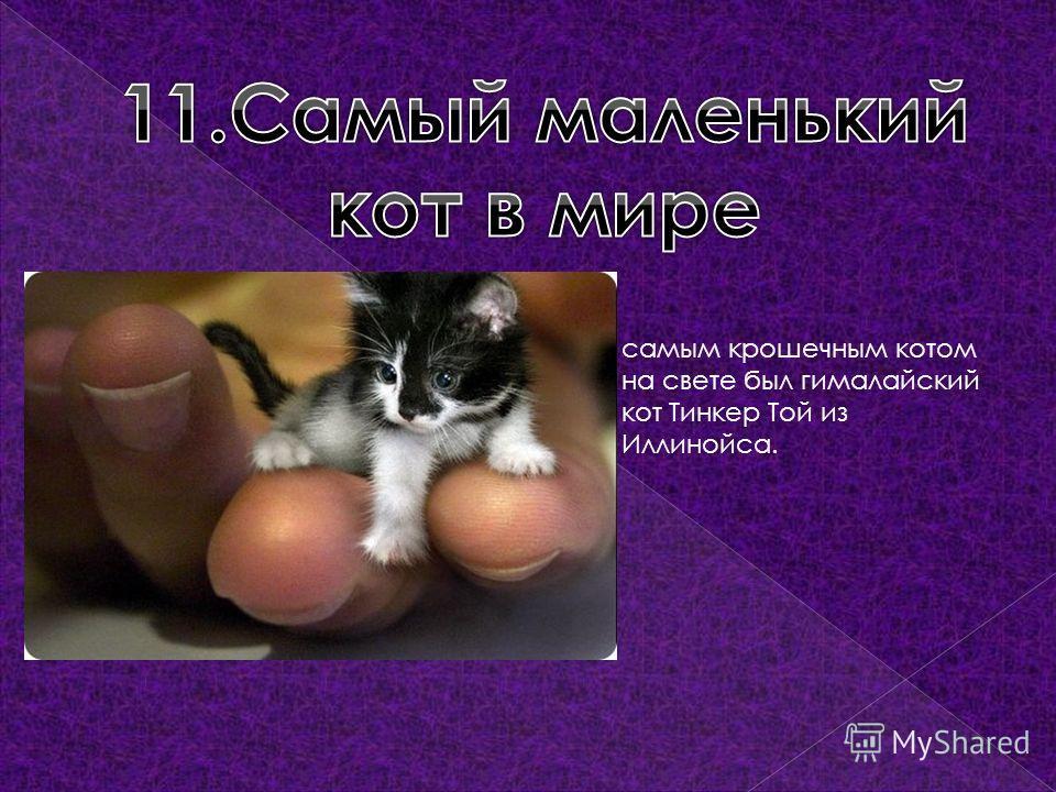самым крошечным котом на свете был гималайский кот Тинкер Той из Иллинойса.