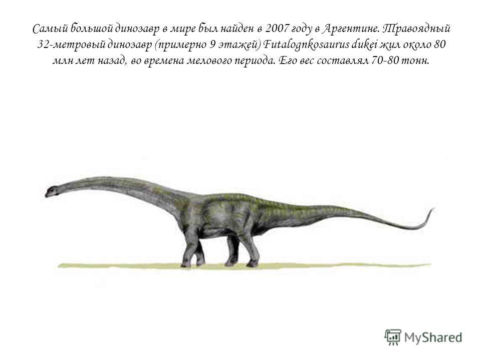 Самый большой динозавр в мире был найден в 2007 году в Аргентине. Травоядный 32-метровый динозавр (примерно 9 этажей) Futalognkosaurus dukei жил около 80 млн лет назад, во времена мелового периода. Его вес составлял 70-80 тонн.