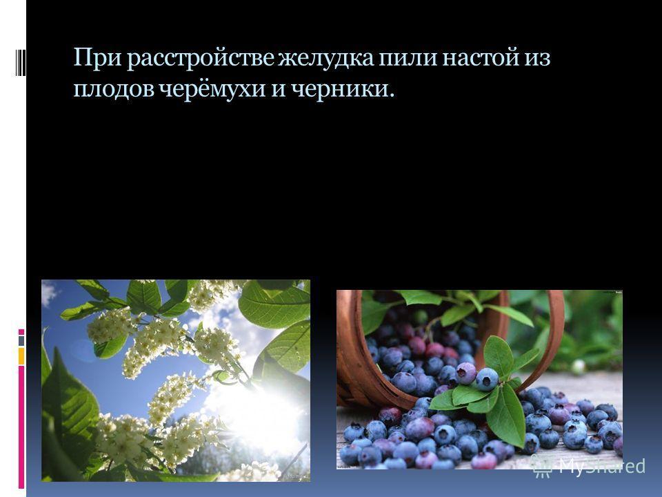 При расстройстве желудка пили настой из плодов черёмухи и черники.