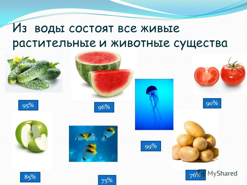 Из воды состоят все живые растительные и животные существа 75% 99% 76% 90% 95% 85% 96%