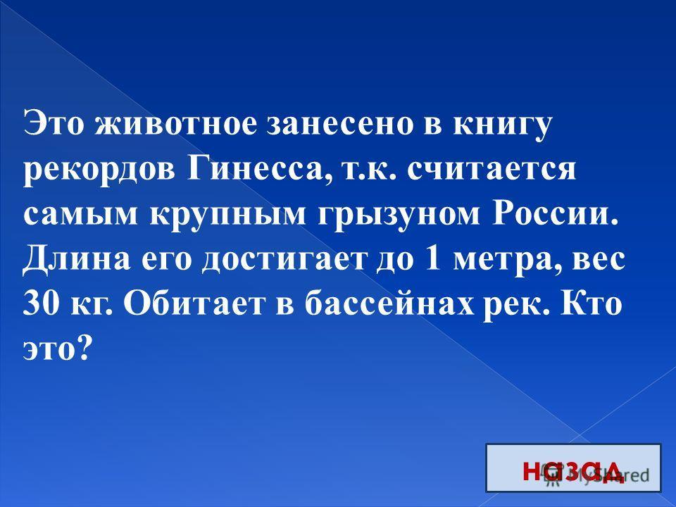 назад Это животное занесено в книгу рекордов Гинесса, т.к. считается самым крупным грызуном России. Длина его достигает до 1 метра, вес 30 кг. Обитает в бассейнах рек. Кто это?