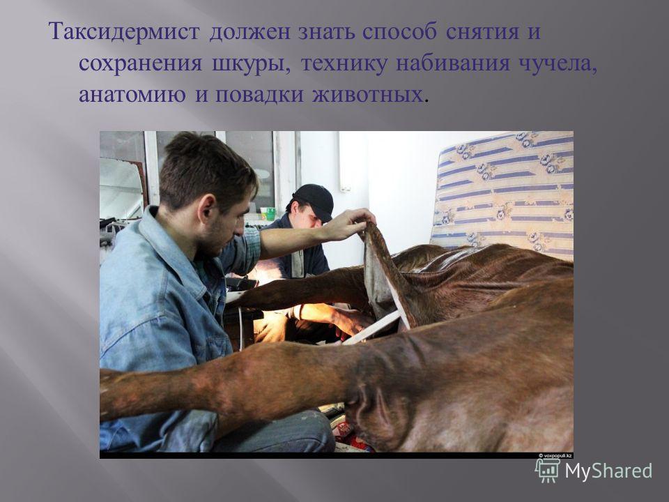 Таксидермист должен знать способ снятия и сохранения шкуры, технику набивания чучела, анатомию и повадки животных.