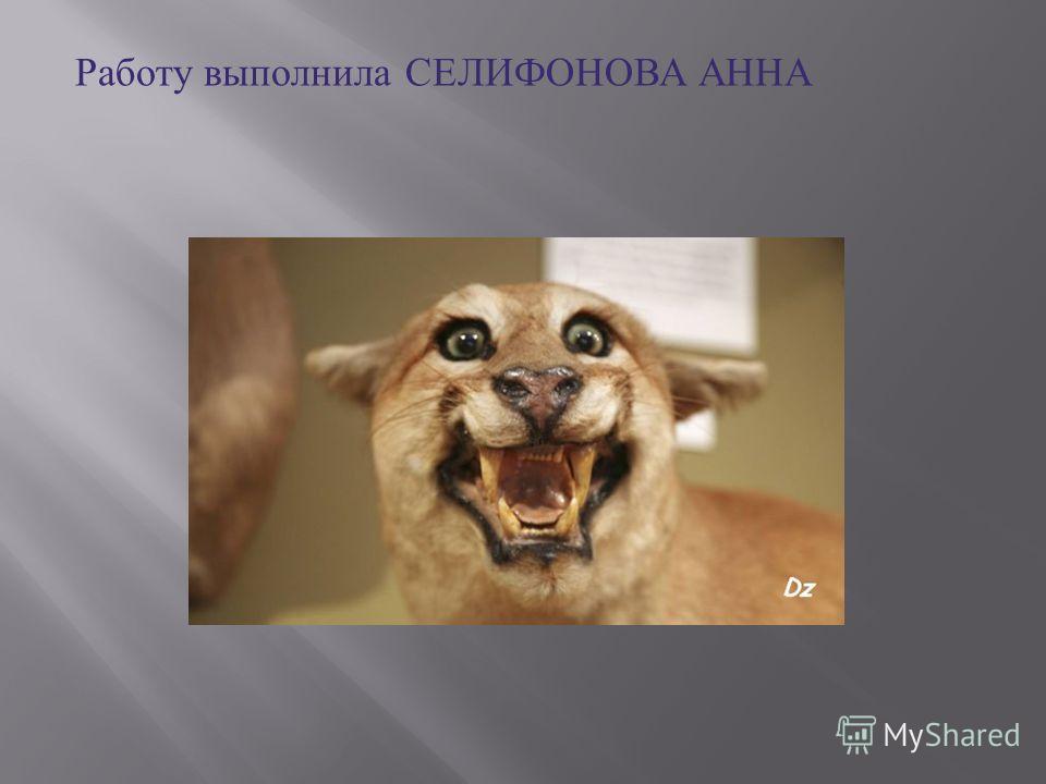Работу выполнила СЕЛИФОНОВА АННА