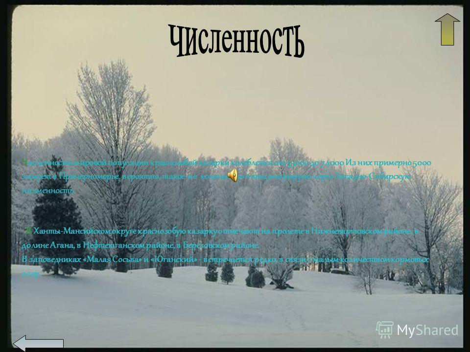 Численность мировой популяции краснозобой казарки колеблется от 35000 до 74000 Из них примерно 5000 зимует в Причерноморье, вероятно, такое же количество птиц мигрирует через Западно-Сибирскую низменность. В Ханты-Мансийском округе краснозобую казарк
