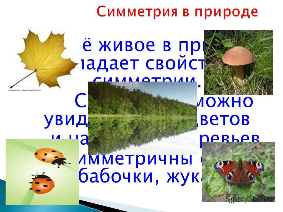 Всё живое в природе обладает свойством симметрии. Симметрию можно увидеть среди цветов и на листьях деревьев. Симметричны формы бабочки, жука.