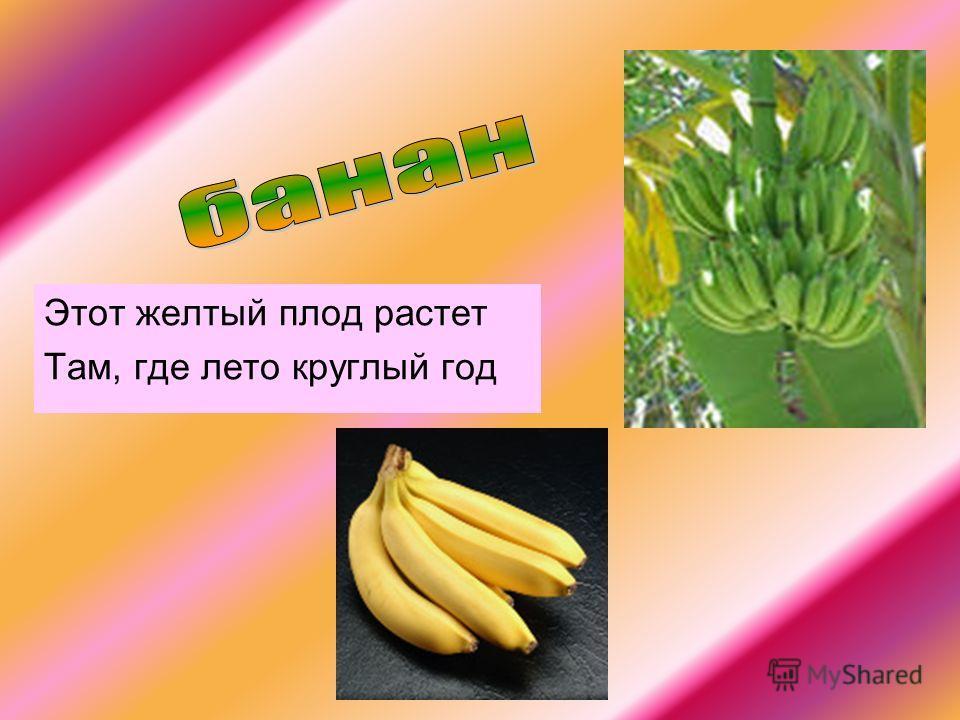 Этот желтый плод растет Там, где лето круглый год
