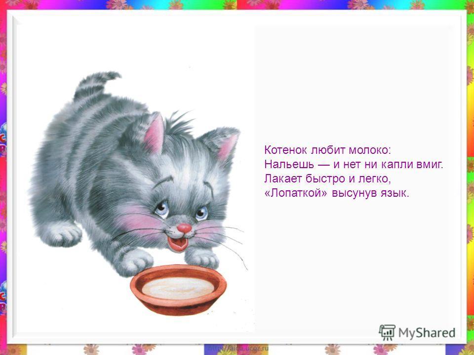 Котенок любит молоко: Нальешь и нет ни капли вмиг. Лакает быстро и легко, «Лопаткой» высунув язык.