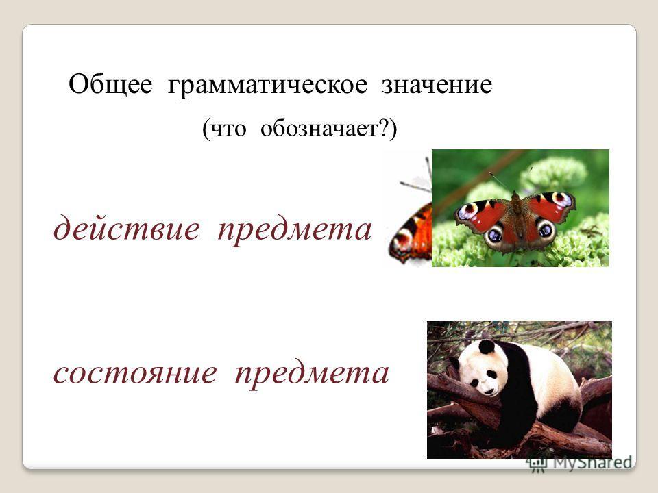 Общее грамматическое значение (что обозначает?) действие предмета состояние предмета