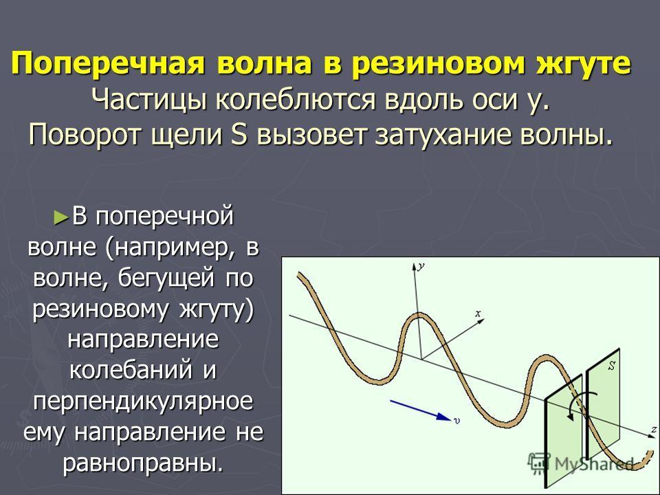 Поперечная волна в резиновом жгуте Частицы колеблются вдоль оси y. Поворот щели S вызовет затухание волны. В поперечной волне (например, в волне, бегущей по резиновому жгуту) направление колебаний и перпендикулярное ему направление не равноправны. В