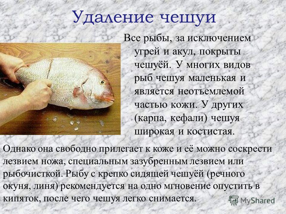 Удаление чешуи Все рыбы, за исключением угрей и акул, покрыты чешуёй. У многих видов рыб чешуя маленькая и является неотъемлемой частью кожи. У других (карпа, кефали) чешуя широкая и костистая. Однако она свободно прилегает к коже и её можно соскрест