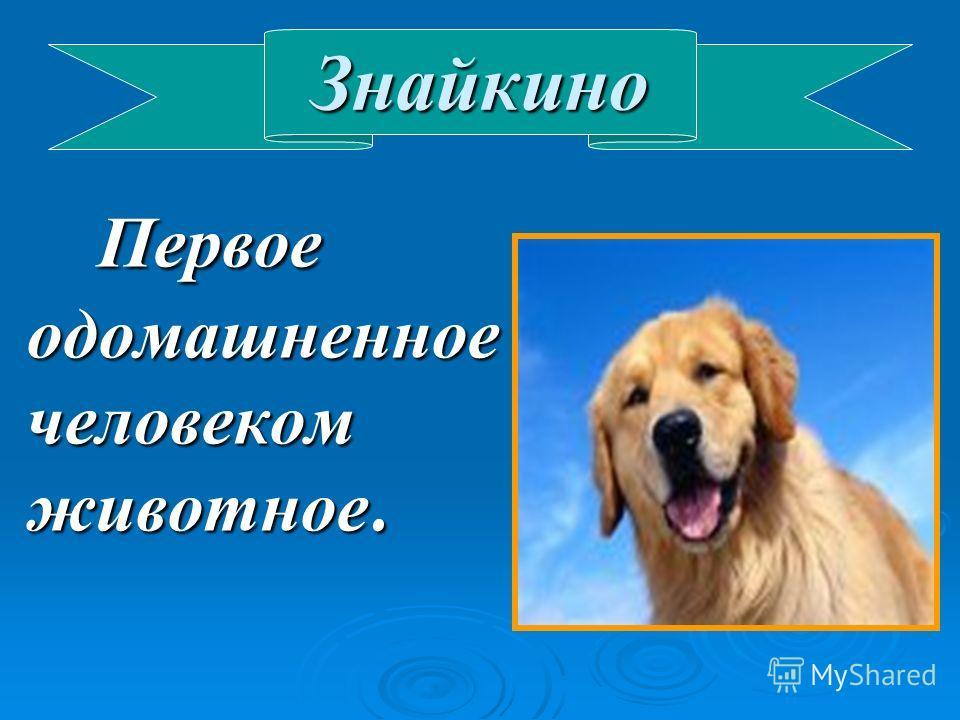 Знайкино Первое одомашненное человеком животное. Первое одомашненное человеком животное.