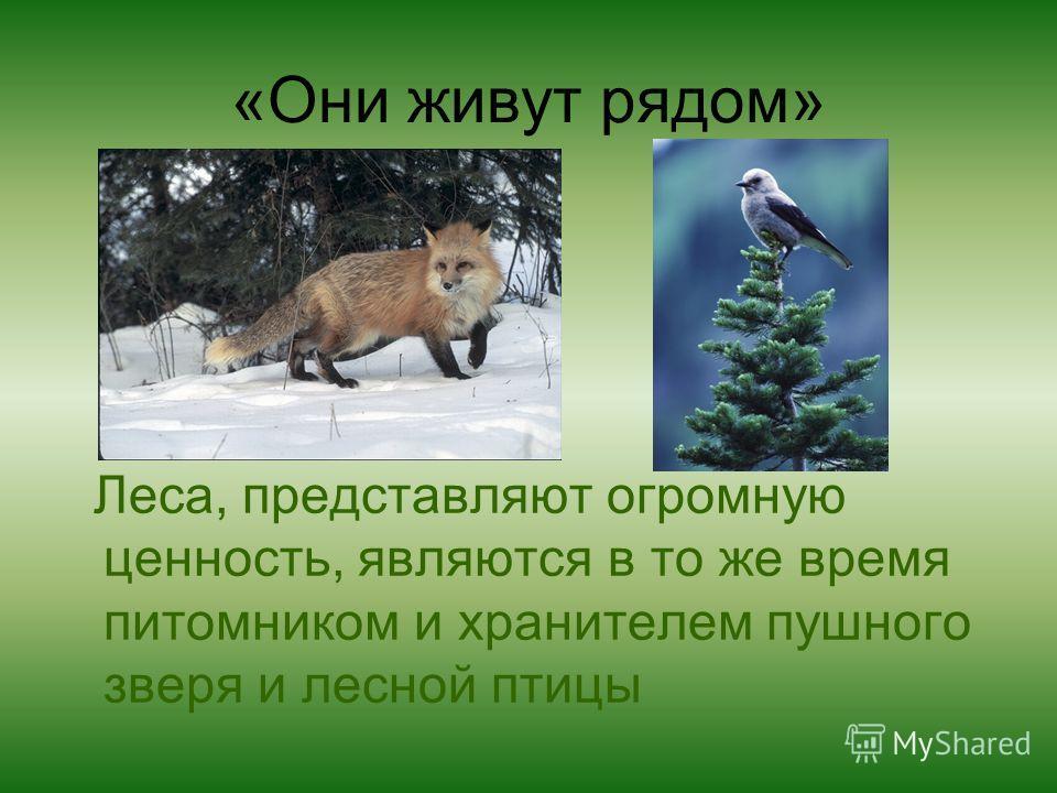 «Они живут рядом» Леса, представляют огромную ценность, являются в то же время питомником и хранителем пушного зверя и лесной птицы