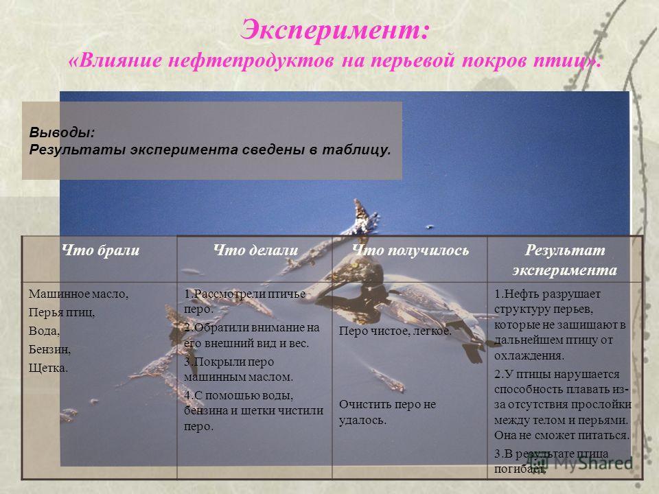 Выводы: Результаты эксперимента сведены в таблицу. Эксперимент: «Влияние нефтепродуктов на перьевой покров птиц». Что бралиЧто делалиЧто получилосьРезультат эксперимента Машинное масло, Перья птиц, Вода, Бензин, Щетка. 1.Рассмотрели птичье перо. 2.Об