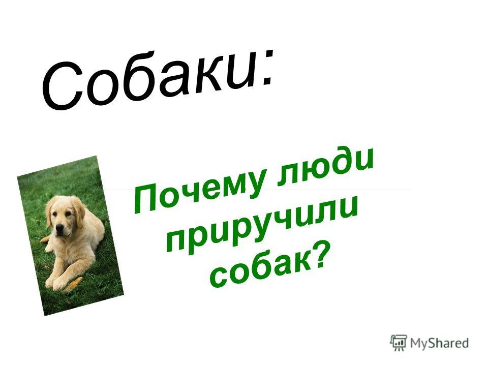 Почему люди приручили собак? Собаки: